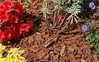 Lay a Proper Bed for Your Garden with Pine Straw and Mulch