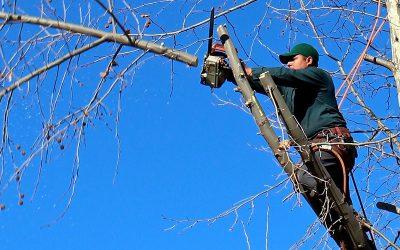 Fallen Tree Responsibility Law