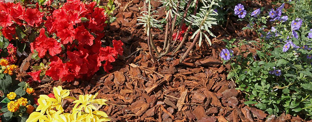 Pine Straw and Mulch - Blog - Peach Lawn Solutions