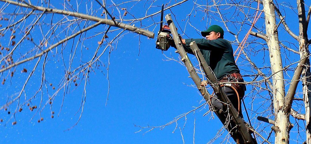 Fallen Tree Responsibility Law - Blog - Peach Lawn Solutions