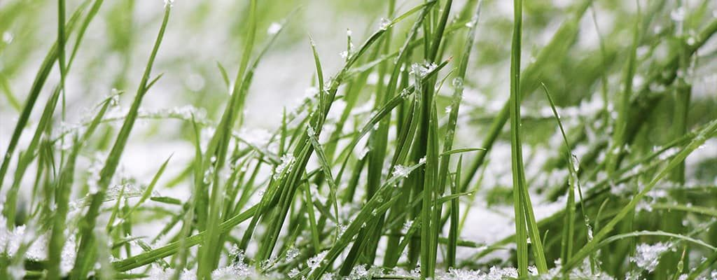 Winterizing Sprinkler Systems and Pipes - Frozen Grass - Peach Lawn Solutions